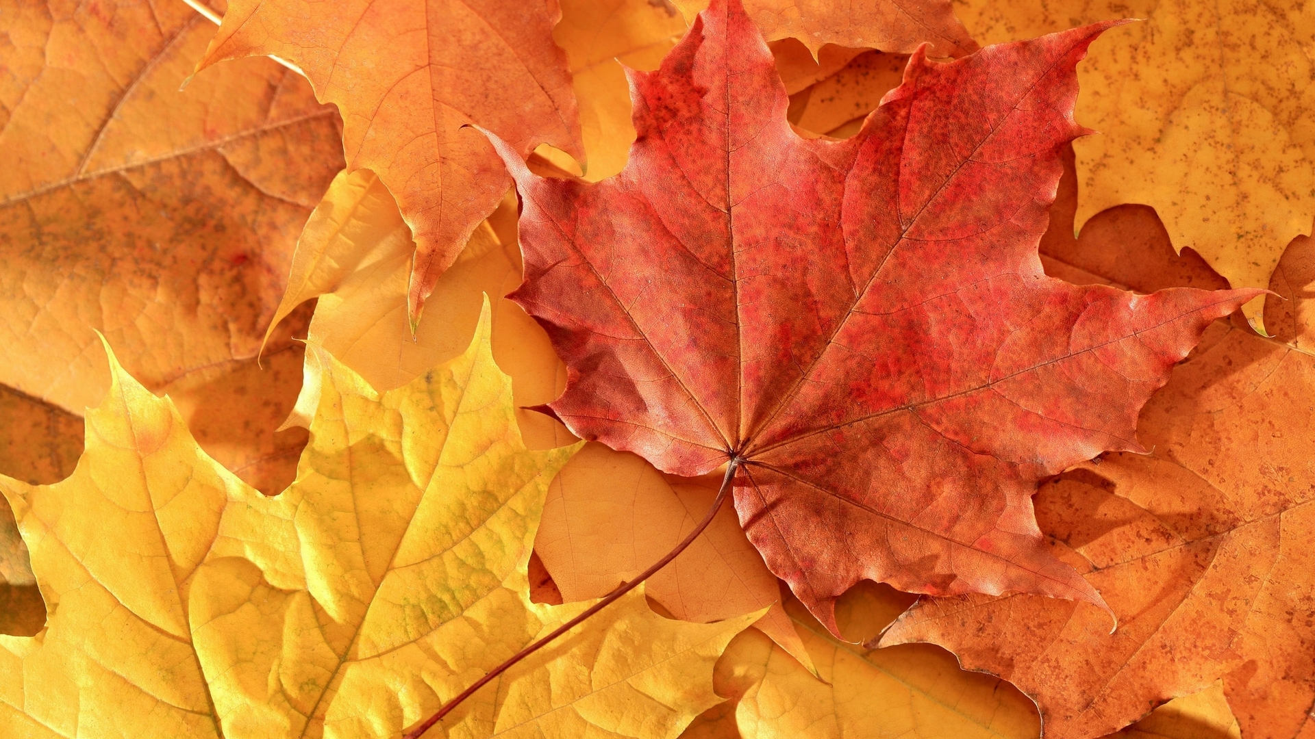 Обои листья, листопад, осень, желтые