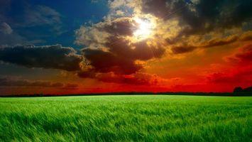 Фото бесплатно небо, облака, солнце, горизонт, лес, трава, поле, природа
