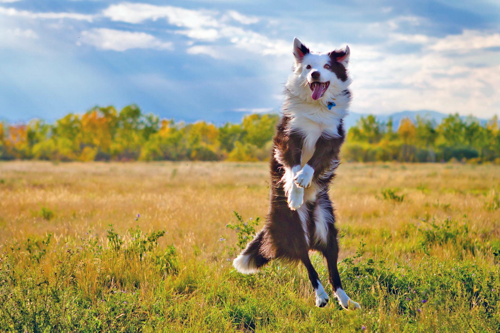поле, собака, всё
