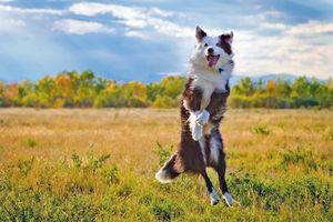 Заставки поле, собака, всё