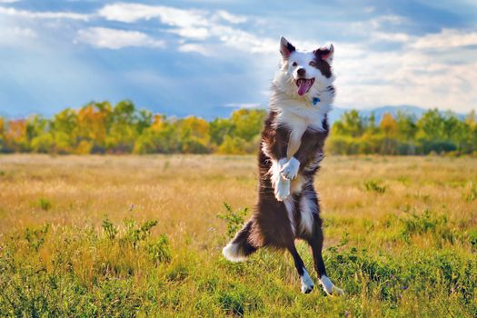 Фото бесплатно поле, собака, всё