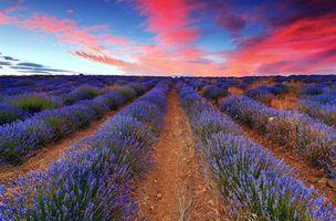 Бесплатные фото поле, цветы, закат, пейзажи