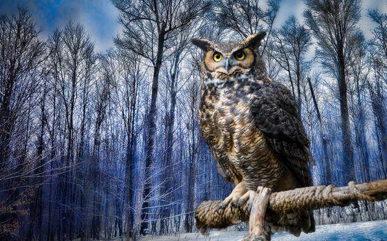 Бесплатные фото сова,зима,лес,глаза,взгляд,синева,птицы