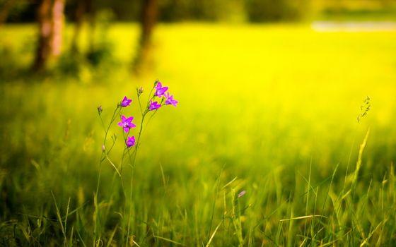 Фото бесплатно стебель, цветок, поле