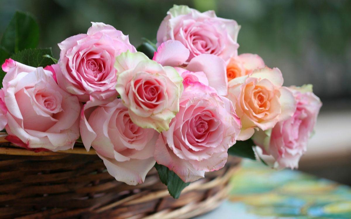 Фото бесплатно цветы, бутоны, лепестки, листья, корзинка, разное