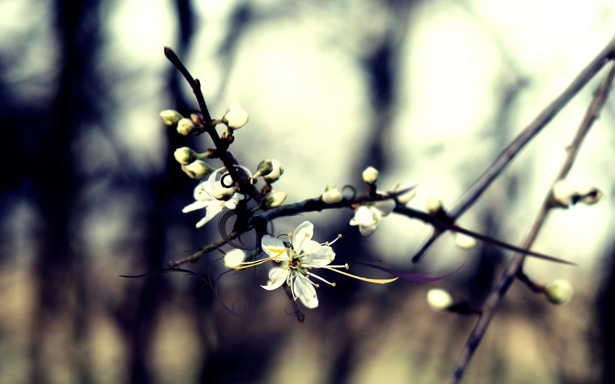 Обои вишня, груша, ветка, сад, дерево, парк, вена, цветение, лепестки, тычинка, цветы на телефон | картинки цветы