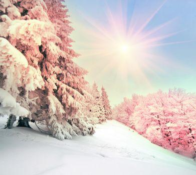 Бесплатно зима, снег фото горячие