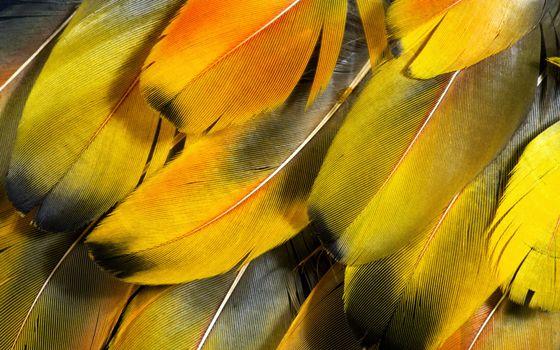 Photo free 1920x1200, feathers, macro