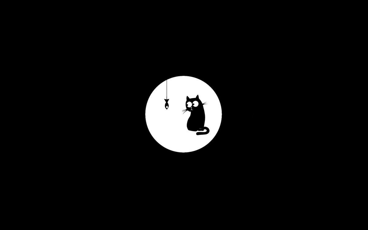 Фото бесплатно черно-белый, черный кот, кот, рыба, разное