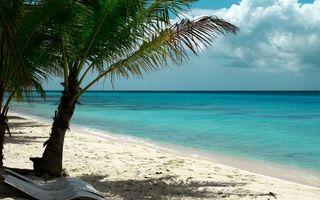 Фото бесплатно пальмы, берег, облака