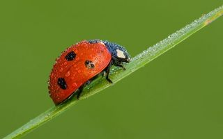 Photo free lady, ladybird, leaf