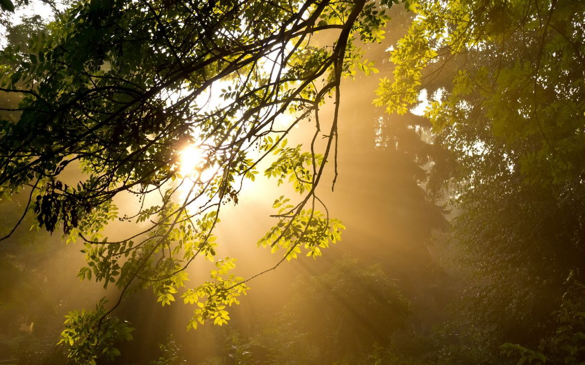 Фото бесплатно дерево, растение, ветки, листья, крона, парк, лес, утро, лучи, небо, природа, природа