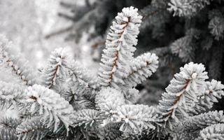 Фото бесплатно елка, ветки, снег