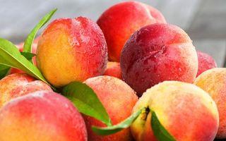 Фото бесплатно фрукты, персики, спелые, мокрые, листья, зеленые, еда