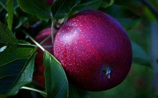Заставки фрукты, яблоки, красные, спелые, листья, зеленые, еда