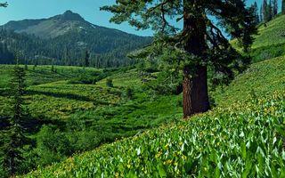 Бесплатные фото холм,горы,небо,облака,деревья,склон,природа