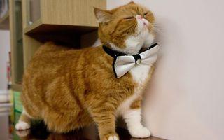 Бесплатные фото кот, рыжий, бабочка, пузо, шерсть, лапы, кошки