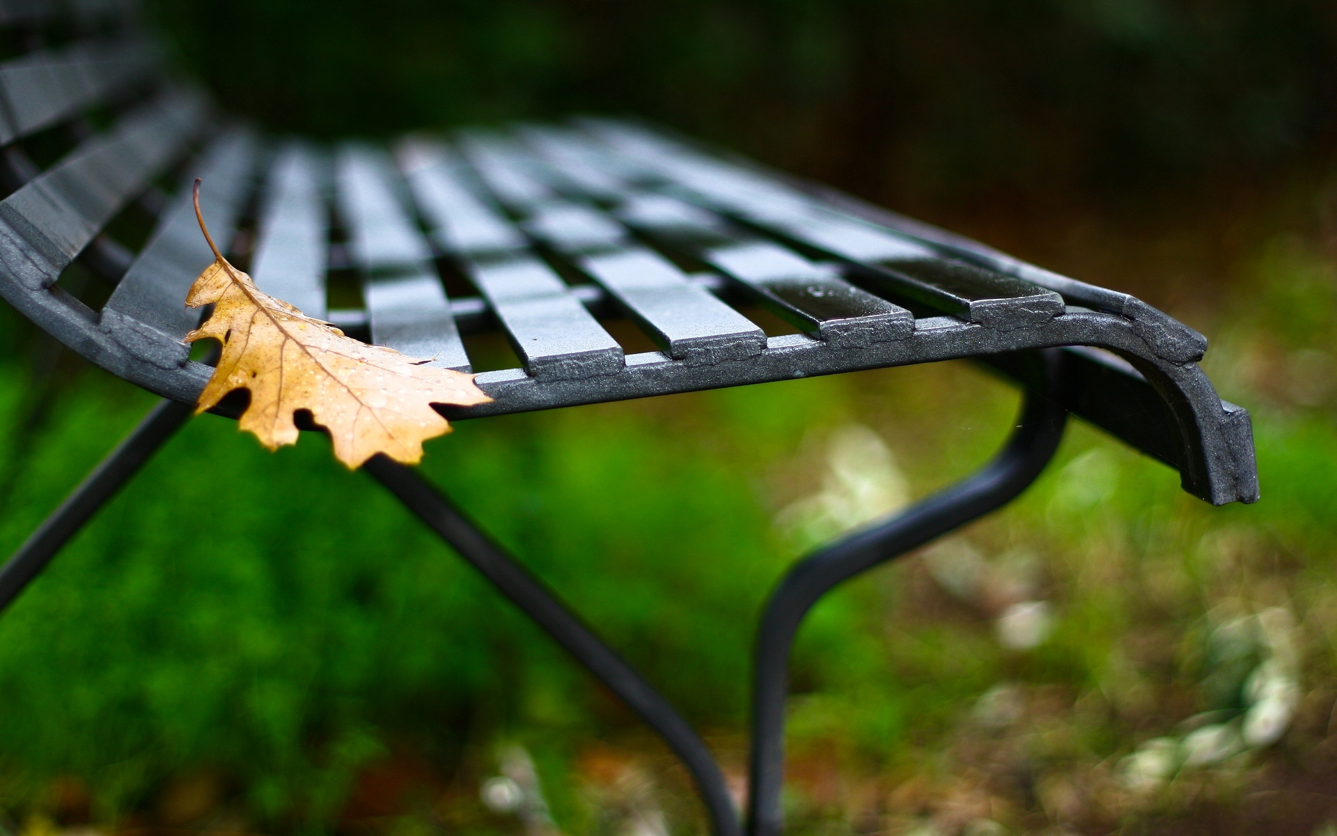 Обои лавочка, скамейка, лист, осень