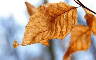 Фото бесплатно листок, желтый, осень
