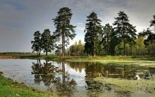 Бесплатные фото озеро,водоросли,отражение,деревья,трава,небо,природа