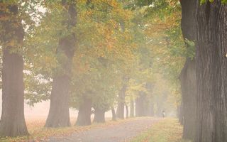 Фото бесплатно туман, разное, всадник