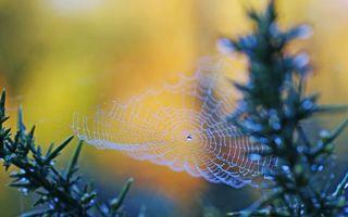 Бесплатные фото паутина,ловушка,узор,капли,роса,ветки,природа