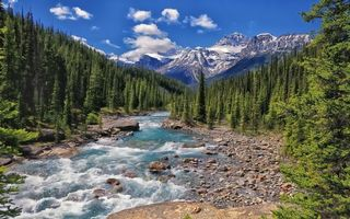 Photo free stream, water, forest