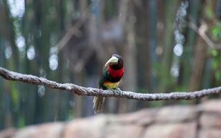 Photo free tropics, a bird, a beak