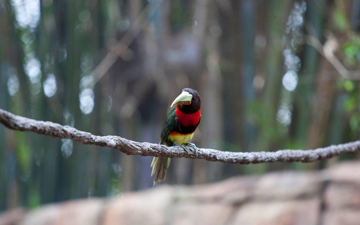 Фото бесплатно тропики, птица, клюв - на рабочий стол