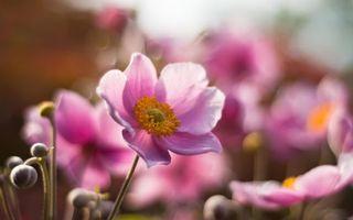 Бесплатные фото цветок, лепестки, листья, клумба, бутоны, стебли, тычинка
