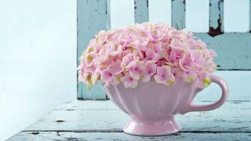 Фото бесплатно цветы, лепестки, горшок
