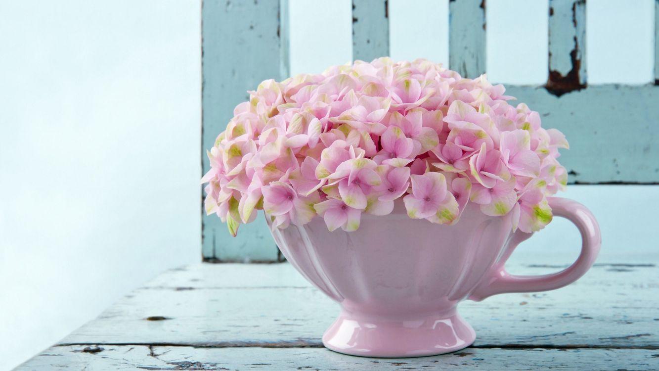 Фото бесплатно цветы, лепестки, горшок, окно, подоконник, свет, краска, цветы, цветы