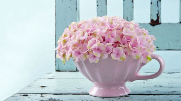 Photo free flowers, petals, pot