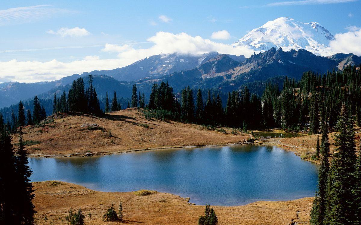 Фото бесплатно вода, река, озеро, песок, пляж, деревья, лес, природа, природа - скачать на рабочий стол