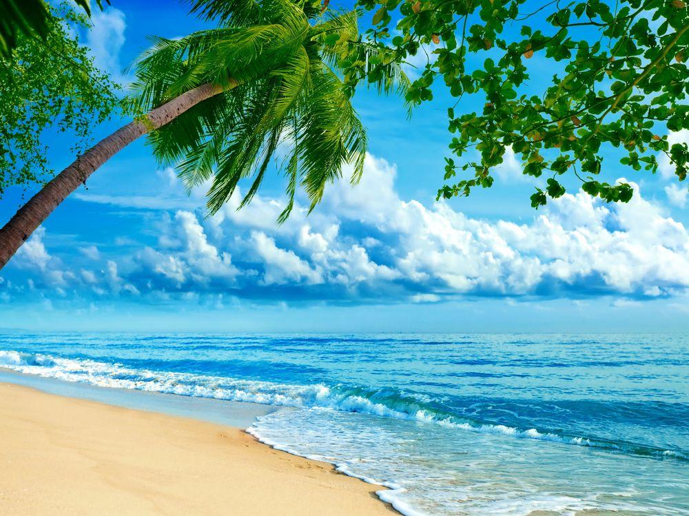 Фото пляж, пальмы в хорошем качестве