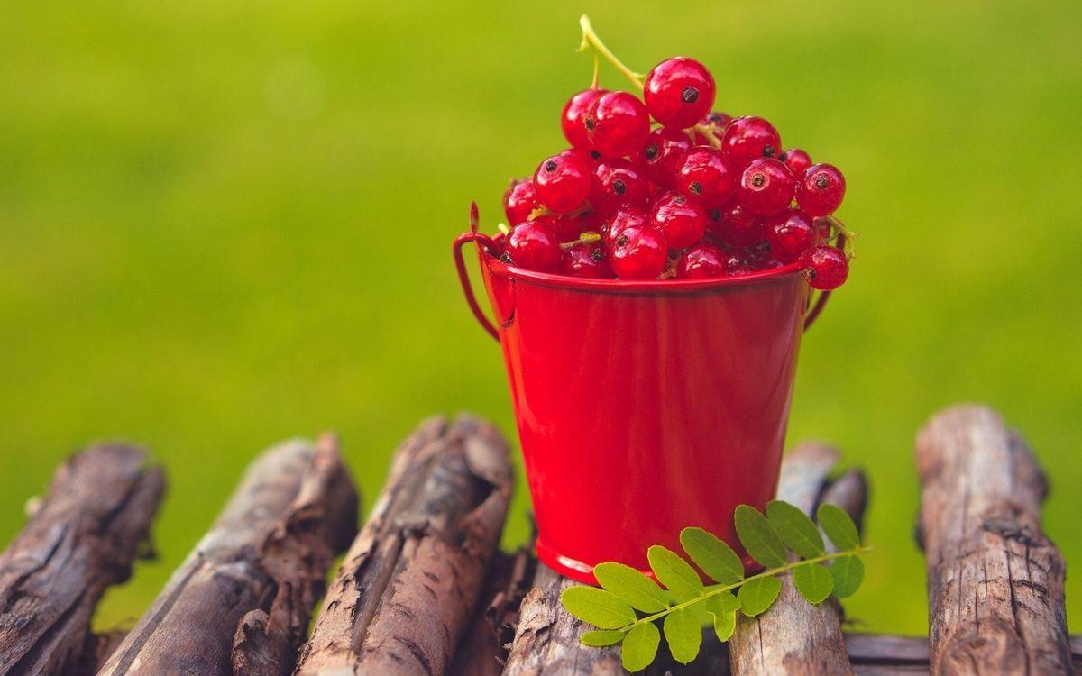 Фото бесплатно ягода, смородина красная, ведерко - на рабочий стол