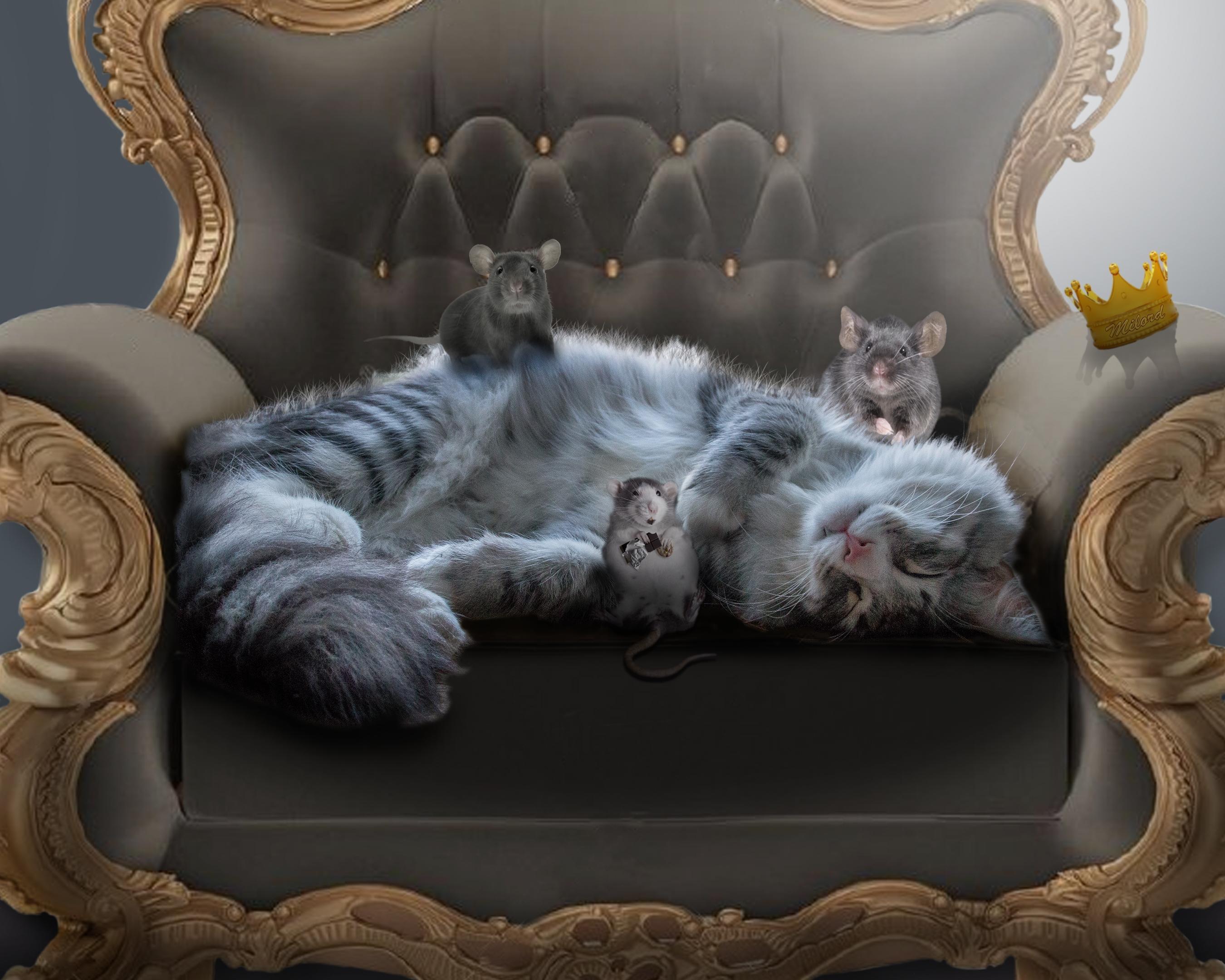 Обои кресло, кошка, крысы