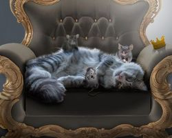 Бесплатные фото кресло,кошка,крысы