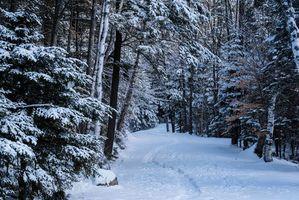 Обои Национальный парк Адирондак, штат Нью-Йорк, США, лес, деревья, тропинка, пейзаж