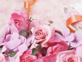 Бесплатные фото розы,букет,лента,розовый