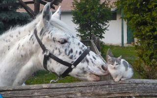 Бесплатные фото конь,лошадь,морда,узда,грива,котенок,забор