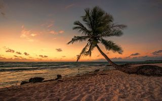 Бесплатные фото пляж,песок,пальма,закат,море