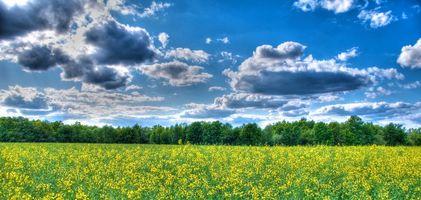 Бесплатные фото поле,цветы,деревья,небо,облака,пейзаж