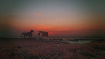Заставки лошади, берег моря, трава