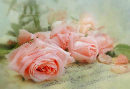Фото бесплатно флора, цветы, письмо