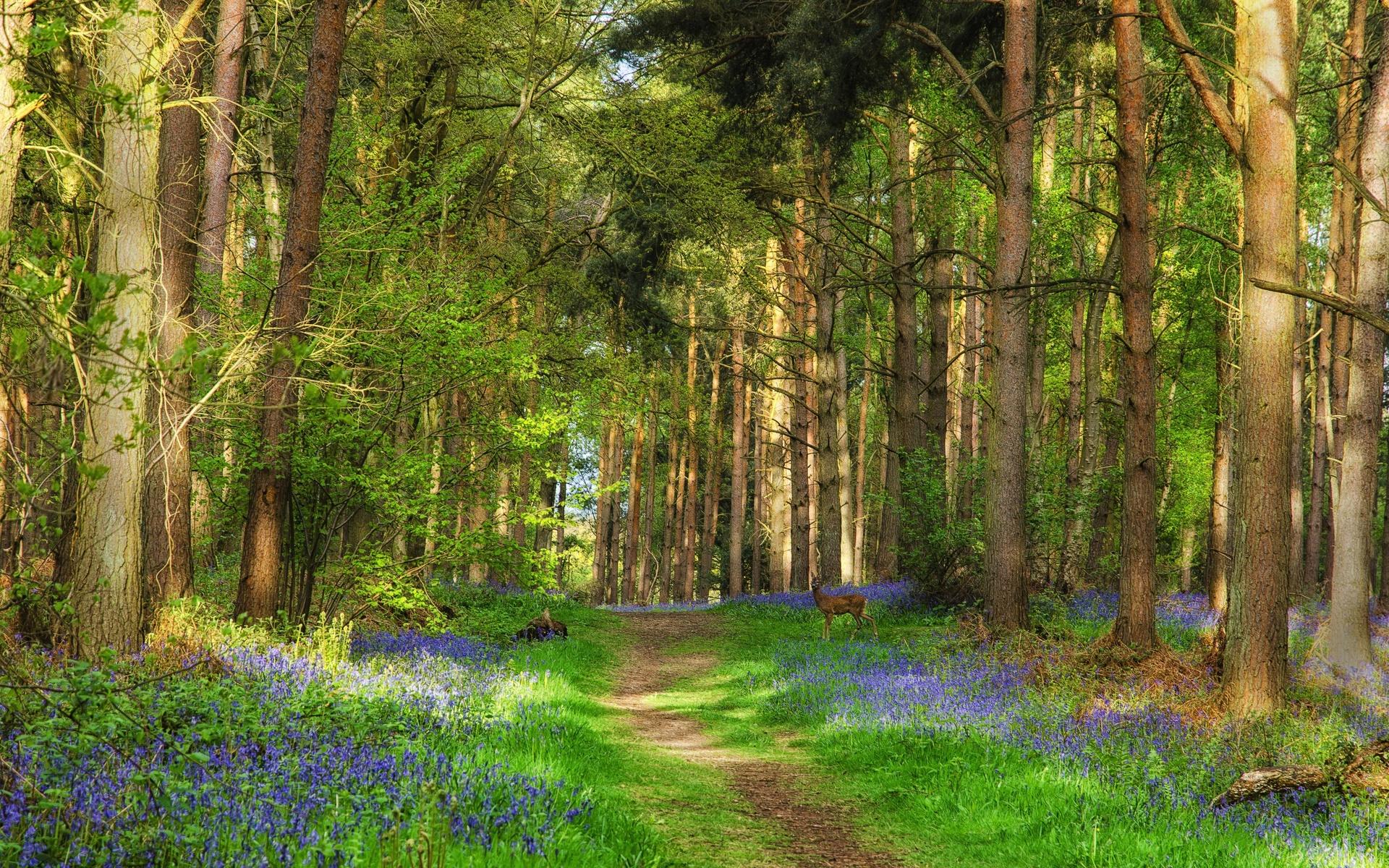 лесные пейзажи фото высокого разрешения популярность можно сравнить