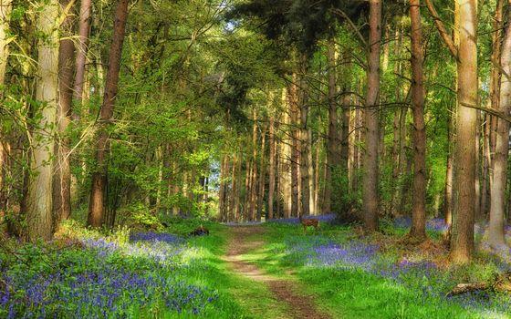Фото бесплатно лето, лес, деревья, тропа, трава, олень молодой