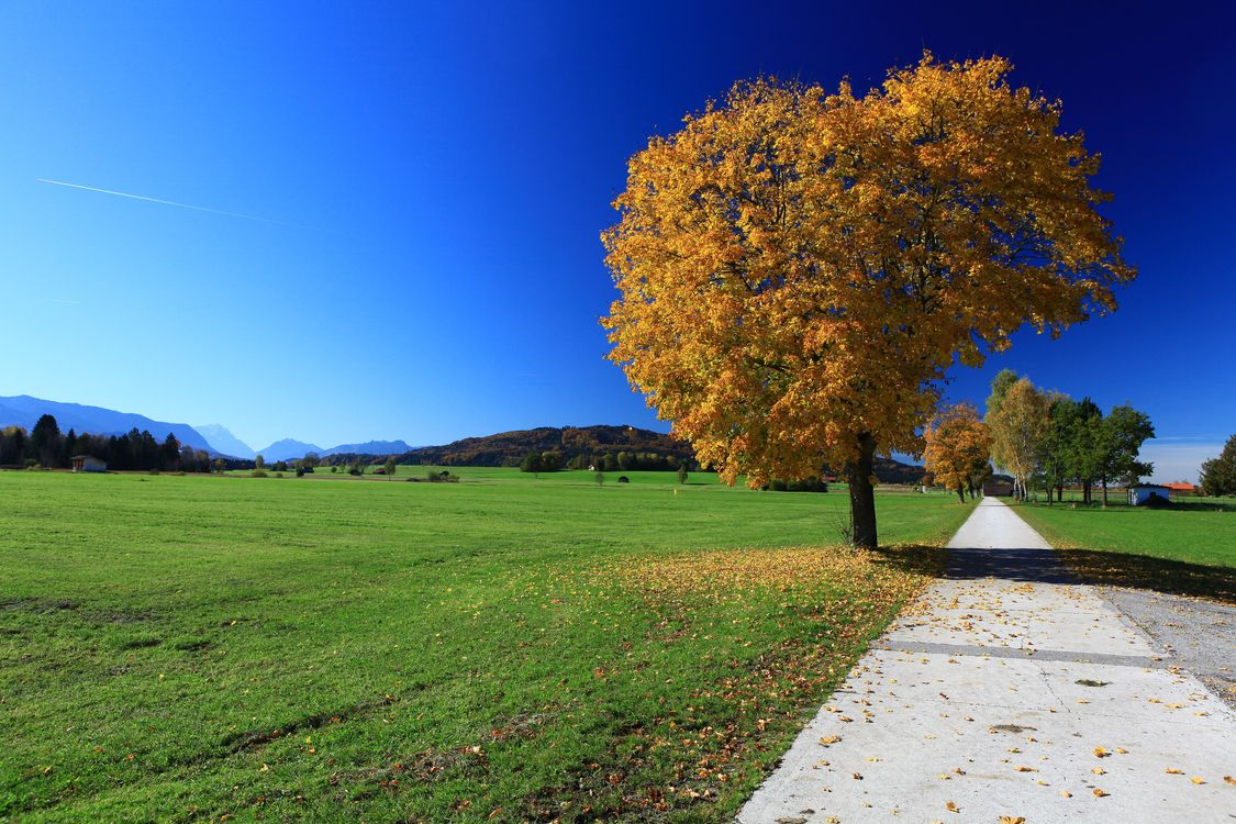 Фото бесплатно осень, поле, деревья, дорога, пейзаж, пейзажи - скачать на рабочий стол
