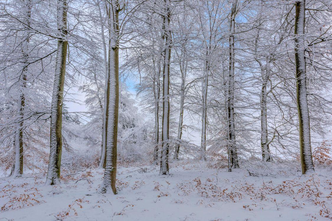 Фото бесплатно зима, лес, деревья, пейзаж, пейзажи
