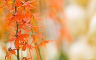 Бесплатные фото цветочки, лепестки, оранжевые, пестики, стебли